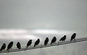 גשם ציפורים 13.2.15 079.jpg
