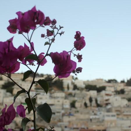 להיות שכנים לשכינה - לרגל יובל  לשחרור ירושלים